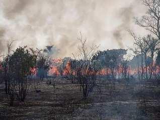 Pantanal Bolivia