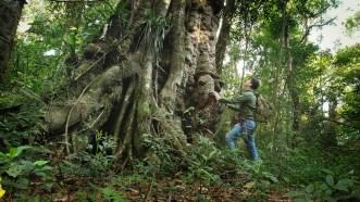 Reserva Biosfera Yabotí Foto Sergio Moya