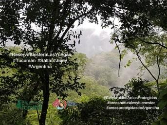 13 AN Reserva de Biosfera Las Yungas. Foto Claudio Terres
