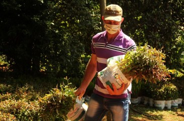 Plan El Soberbio entrega de plantines de eucalitus 4 (2)
