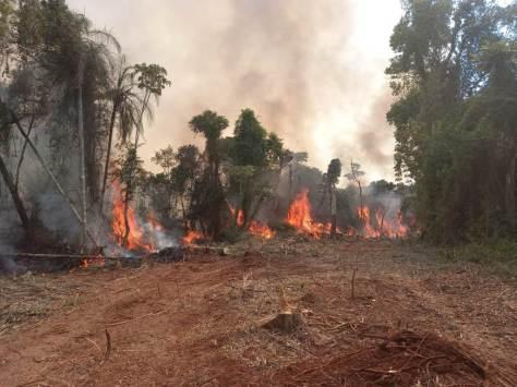 Yaboti en llamas