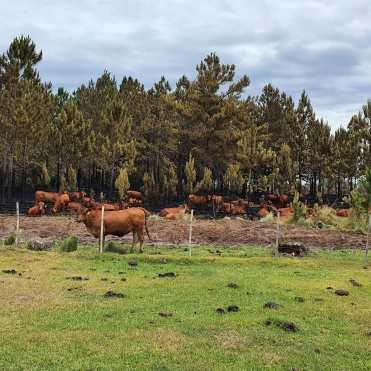 Corrientes Incendios Virasoro2