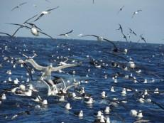 3 Albatros y petreles - Nahuel Chávez