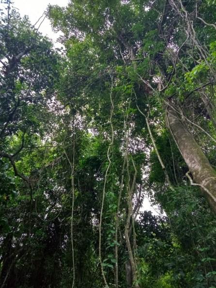 Bosque Atlantico 3