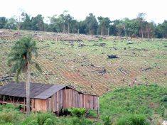 Foto ArgentinaForestal Desarrollo Socio Territorial 3