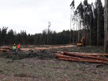 Empresas Forestales PEFC Cerfoar (2)