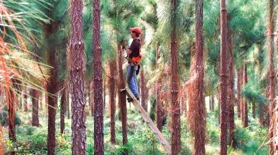 Servicio Forestal 5