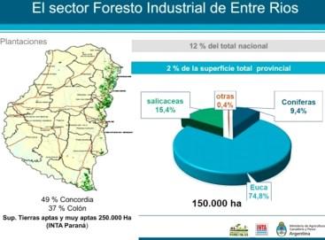 desarrolo forestal superficies forestadas