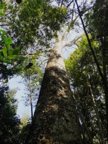 Bosques Mbaracayu 8