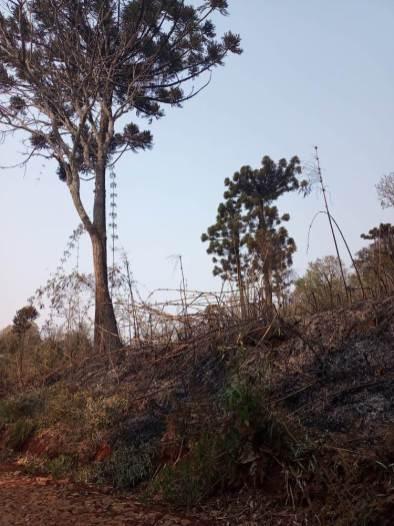 Incendio en el PP Araucaria Agosto 2021 (5)