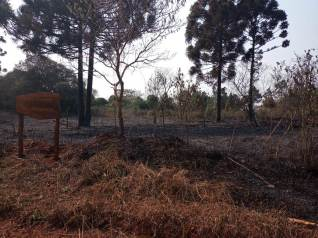 Incendio en el Parque Araucaria (1)