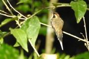 RN Privada Bio Karadya y Logde (aves)1