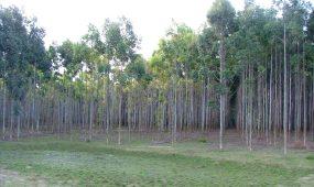 ER Jornadas forestales 15