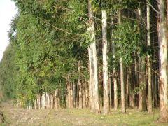 ER Jornadas forestales 18