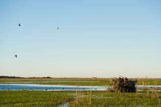 Hunting ducks