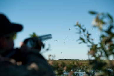 Duck hunting in Argentina