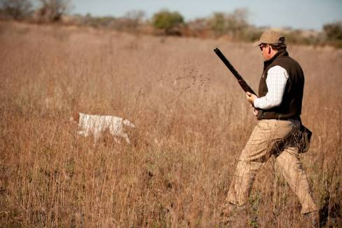 Partridge hunting in Argentina