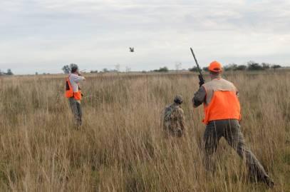 Hunting partridge
