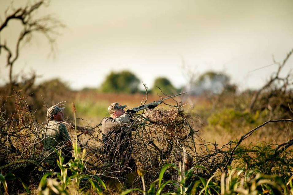 Hunting doves at Malalcue