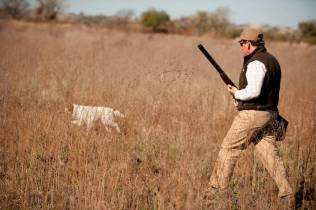 Partridge hunting with dogs
