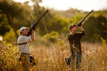 Pigeon hunting in Argentina