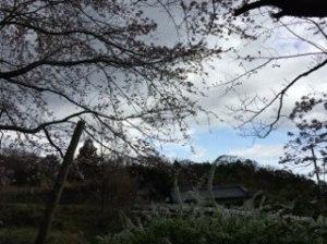 写真 2016-04-03 4 14 15