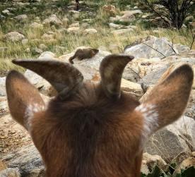 Hi marmot!