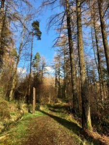 Tarbet Isle Forest Path
