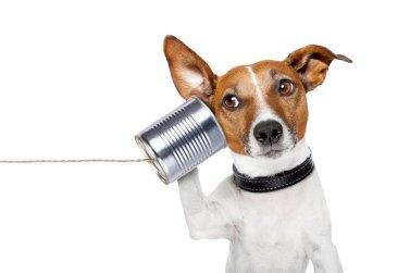 doggie-listening