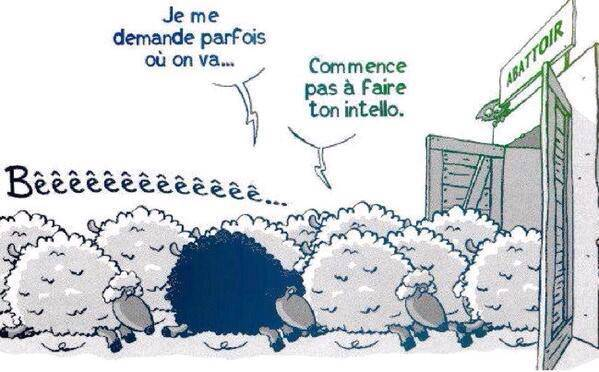 moutons_blancs_idiots_vs_mouton_noir_intello