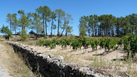 vines and classic agriculture