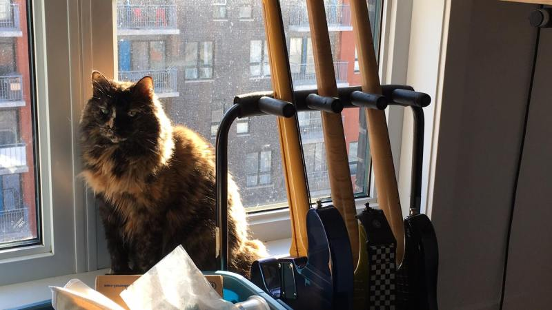 Kétamine le chat relaxe devant une fenêtre