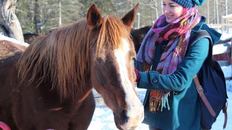 Photo de Sugar le cheval avec l'artiste