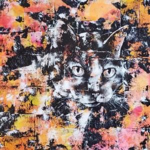 Portrait de chat - Minoune