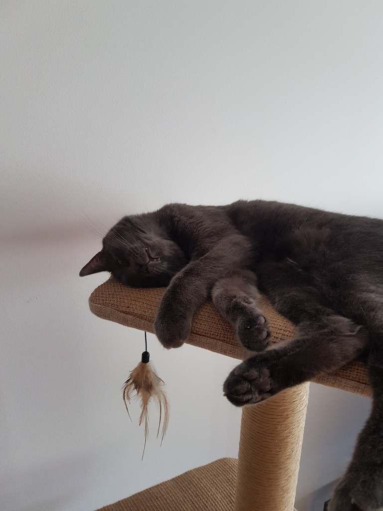 Zucchini (maintenant Yubé) en train de dormir