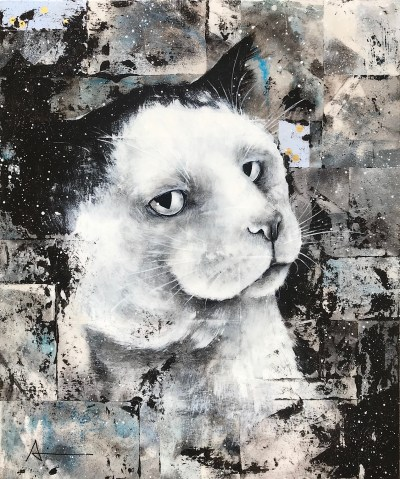Portrait de Boris le chat