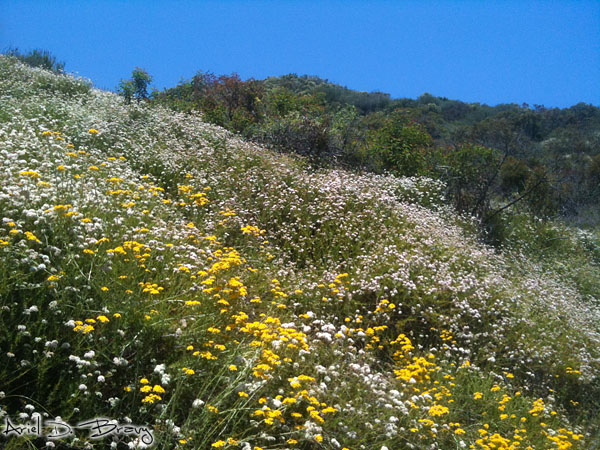 Hillside wildflowers