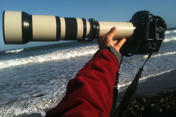 Canon 1D and Rokinon 650-1300mm lens