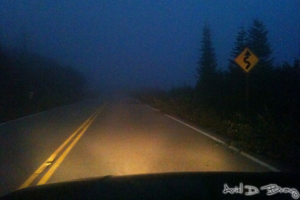 Coming back down through the evening fog