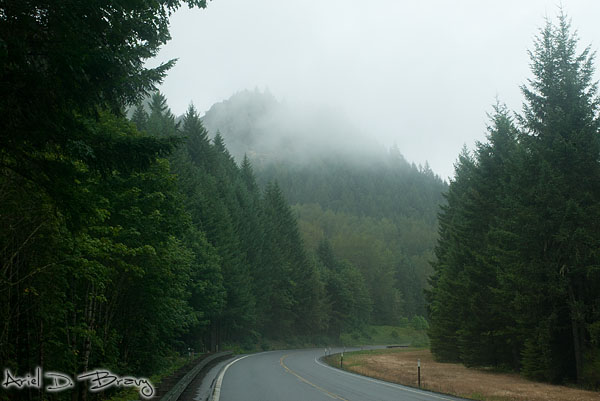 Driving through the foggy forresty Oregon mountains