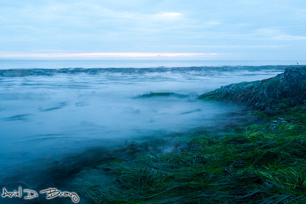 Seaweed and oceanwater along the Olympic Peninsula