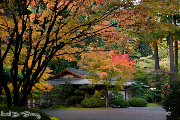 Japanese style building under colorful trees