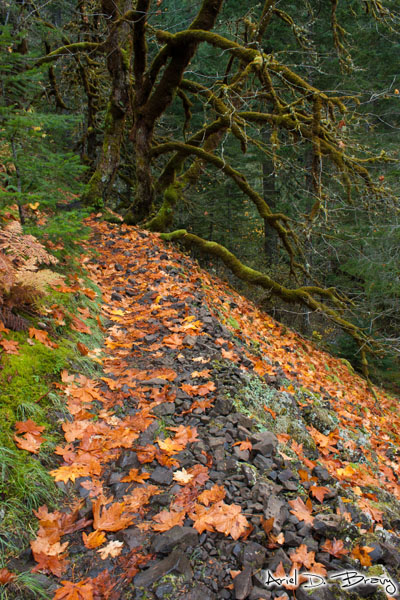 Fallen leaves strewn along a rocky path