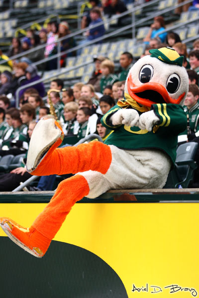 The Duck!