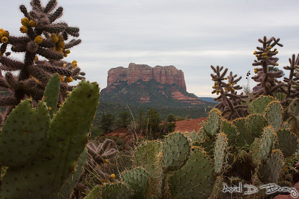 Cacti and red rocks