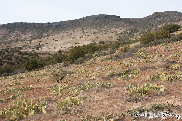 I love the variety of green plants that live on this slope up towards the ridge... cacti, trees, brush, grass, bushes...