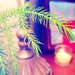 pine-pic