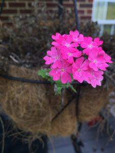 living flower