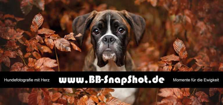 BB-Snapshot
