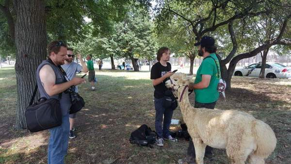Ethan Abbot of JustusRiders.org and his alpaca, Shae, at the DNC protests in Philadelphia